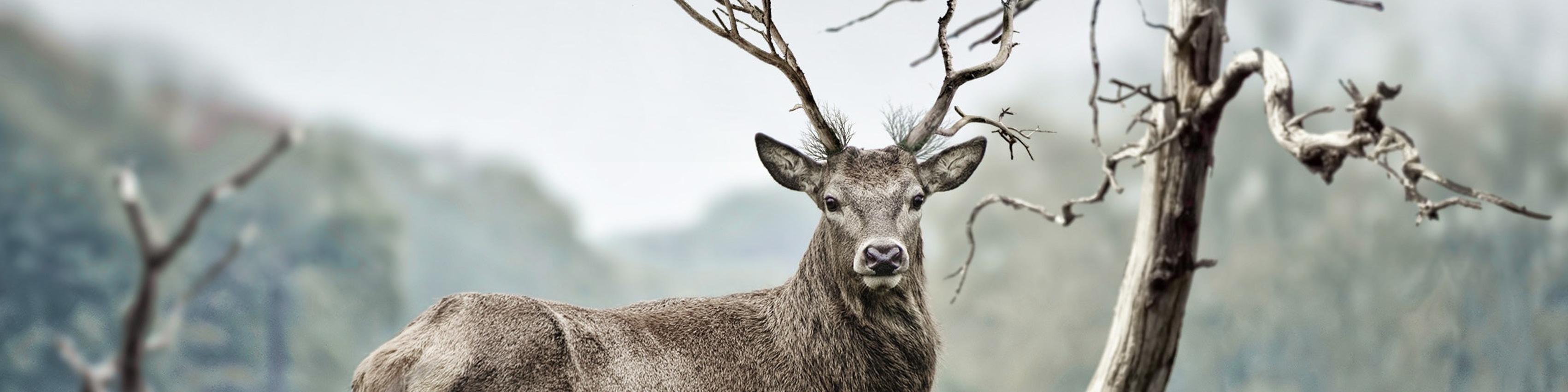 Bekijk details van Natuur & Dieren | meer boeken