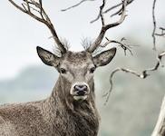 Bekijk details van Natuur & Dieren | E-books